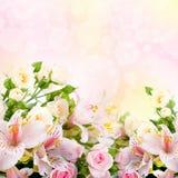 Красивейший покрашенный цветок blured и Стоковые Фотографии RF