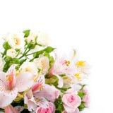Красивейший покрашенный цветок blured и Стоковое Изображение RF