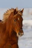 красивейший портрет лошади Стоковая Фотография RF