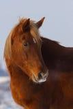 красивейший портрет лошади Стоковая Фотография