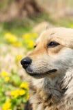 красивейший портрет собаки Стоковое Изображение