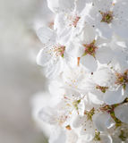 красивейший предыдущий солнечний свет весны цветков Стоковые Фото