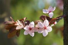 красивейший предыдущий солнечний свет весны цветков Стоковые Изображения