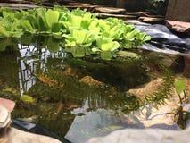 красивейший пруд Стоковые Изображения RF