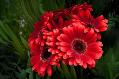 красивейший пук цветет весна стоковое фото