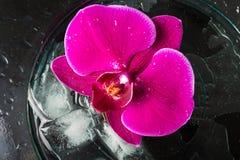 красивейший пурпур орхидеи стоковое изображение
