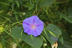 красивейший пурпур цветка стоковое изображение