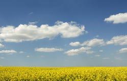 красивейший рапс поля canola стоковая фотография