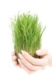 красивейший расти травы Стоковые Фотографии RF