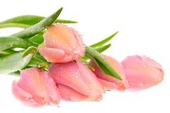 красивейший розовый тюльпан Стоковая Фотография RF