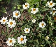 красивейший сад цветка Стоковая Фотография RF