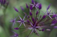 красивейший сад цветков стоковые фото