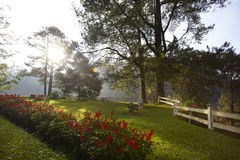 красивейший сад стоковое фото