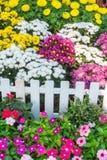 красивейший сад цветка Стоковое фото RF