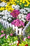 красивейший сад цветка Стоковые Фотографии RF