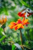 красивейший сад цветков Естественный свет Стоковые Изображения RF