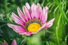 красивейший сад цветков Естественный свет Стоковая Фотография