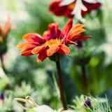 красивейший сад цветков Естественный свет Стоковое Изображение RF