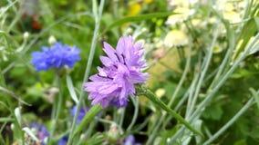 красивейший сад цветков Предпосылка цветка лета Стоковое Изображение