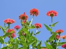 красивейший сад цветков Стоковые Изображения