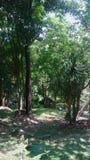 красивейший сад стоковое фото rf