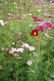красивейший сад Стоковая Фотография