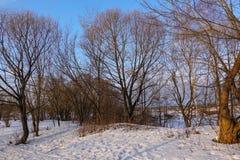 Красивейший сельский ландшафт предыдущая весна Деревья освещены по солнцу снежок голубого неба Россия марш стоковые изображения rf
