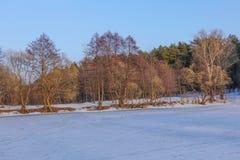 Красивейший сельский ландшафт предыдущая весна Деревья освещены по солнцу снежок голубого неба Россия марш стоковое изображение rf