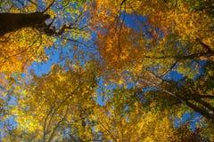 красивейший смотреть outdoors вверх по детенышам женщины Стоковое Изображение