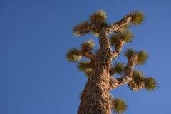 красивейший смотреть outdoors вверх по детенышам женщины Стоковые Изображения RF