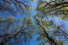 красивейший смотреть outdoors вверх по детенышам женщины Стоковая Фотография