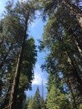 красивейший смотреть outdoors вверх по детенышам женщины Стоковое фото RF