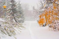 красивейший снежок катания на лыжах ландшафта назначения Стоковое Изображение