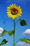 красивейший солнцецвет Художнический стиль картины маслом Стоковые Изображения RF