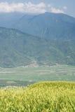 красивейший тигр лилии фермы Стоковые Фотографии RF