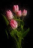 красивейший тюльпан букета Стоковая Фотография RF