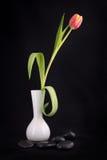 Красивейший тюльпан стоковое фото rf
