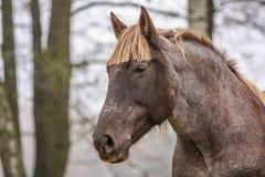 красивейший лужок ландшафта лошади стоковые изображения