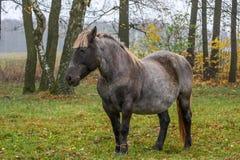 красивейший лужок ландшафта лошади стоковая фотография rf