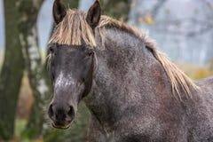 красивейший лужок ландшафта лошади стоковое фото