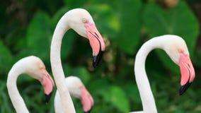 красивейший фламинго птиц Стоковое фото RF