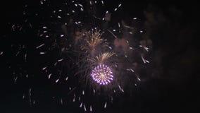красивейший цветастый феиэрверк Торжество сток-видео