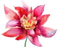 Красивейший цветастый цветок Стоковые Изображения RF