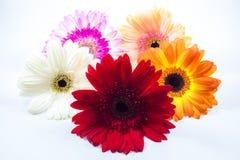 Красивейший цветастый цветок стоковое изображение rf