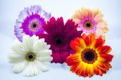 Красивейший цветастый цветок стоковое изображение