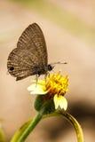 красивейший цветок бабочки Стоковое Изображение RF