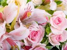Красивейший цветок в лучах света Стоковые Изображения