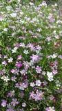 красивейший цветок Стоковые Фото