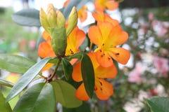 красивейший цветок Стоковая Фотография