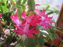 красивейший цветок Стоковое фото RF